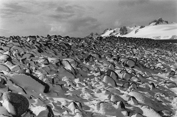 Antártida Negra de Adriana Lestido